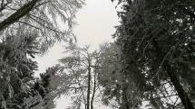 Sedlo Jasenová 1130 mnm