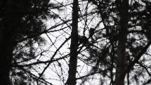 Ďateľ na strome pri Belianskej jaskyni