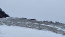 Popoludňajšie sneženie
