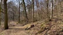 Smolenicky zamok a okolitý les