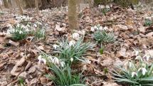 Jarné kvety v Bratislavskej Petržalke
