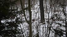 Srnka v lese