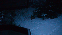 Zajac pri sanatóriu