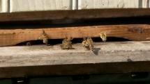 Včely - peľonosné :)