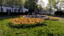 Kvetinové záhony v centre Bratislavy