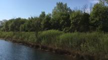 Prebúdzanie jarnej prírody pri Dunaji