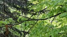 Rozveselená veverica