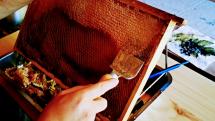 Vytáčanie medu