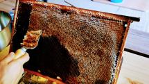 Vytáčanie prvého medu