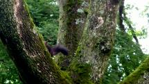 Veverica alebo Stromokocúr  !