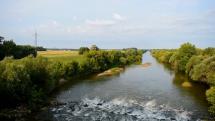 volavky a kačky pri rieke Nitre