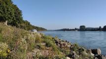Rieka Dunaj pri Devíne