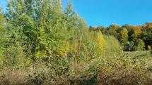 Krasy našich hôr na jeseň