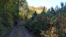 Nová Baňa jesenné scenérie v našom lese