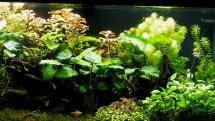 život v akváriu