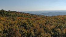 Z rozhľadne na Bratislavskej Kolibe