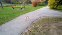 Stratený psík