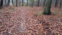 kráčanie lesom