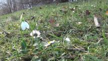 Květy v Lednu