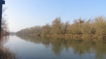 Príroda na rieke Morava, Vysoká pri Morave, dnes 10 hod.