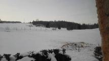 Zver vyčerpaná zimou sa snaží hľadať potravu pri obydliach