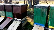 Včielky odkazujú - jar je už tu!