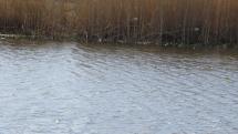 Ožili aj vodné plochy na Záhorí