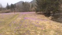 Nádherné kvety - poslovia jari