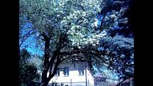 Jar na slov. dedine