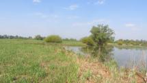 Pri vode - príroda pri ramene Moravy