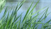 Jazerá Záhoria  - jazero Axi - medzi obcou Láb a Vysokou priu Morave, Záhorie