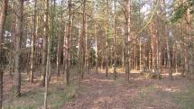 Priateľ les