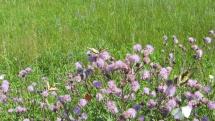 Kráľovstvo motýľov - lúky za Stupavou