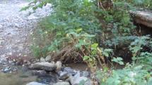 Ráno - žblnkot lesného potôčika na Záhorí - Marianka
