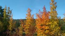 Jeseň maľuje