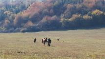 Veľké Pole v okrese Žarnovica
