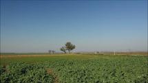 polia v okolí Mochoviec sa ešte zelenajú