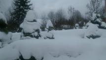 Rokytovce v bielom