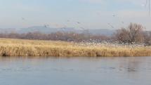 Vodné vtáky na Záhorí