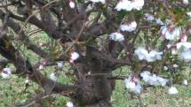Bardejov v kvetoch