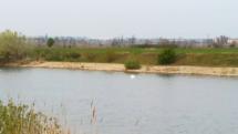 Labute na jazere pri Veľkom Bieli