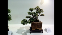 Gardenia Nitra 2