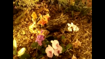 Gardenia Nitra 3