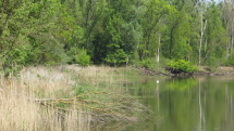 Brehy riek a jazier ožívajú