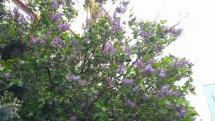 V Bardejove prší a fúka viet