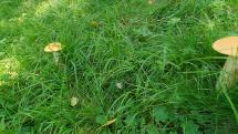 Huby na záhrade