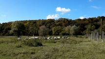 Ovečky  v Krásnom Brode