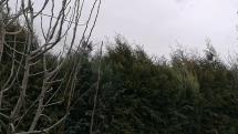 Silný vietor v Senci