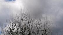 Oblačnosť v Jedľových Kostoľanoch