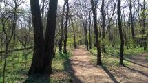 Les pri Petržalskej dostihovej dráhe